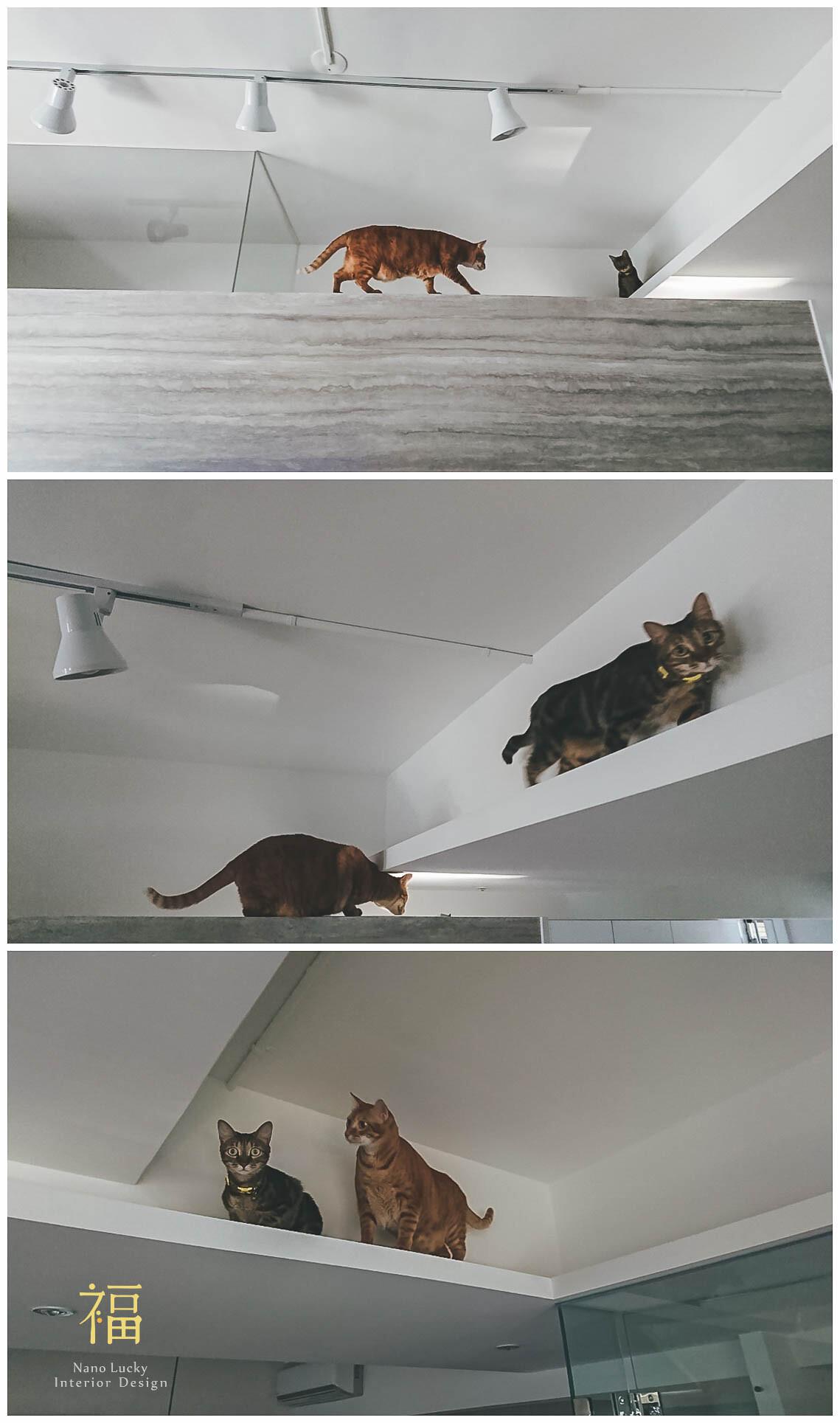寵物住宅貓咪通道設計05