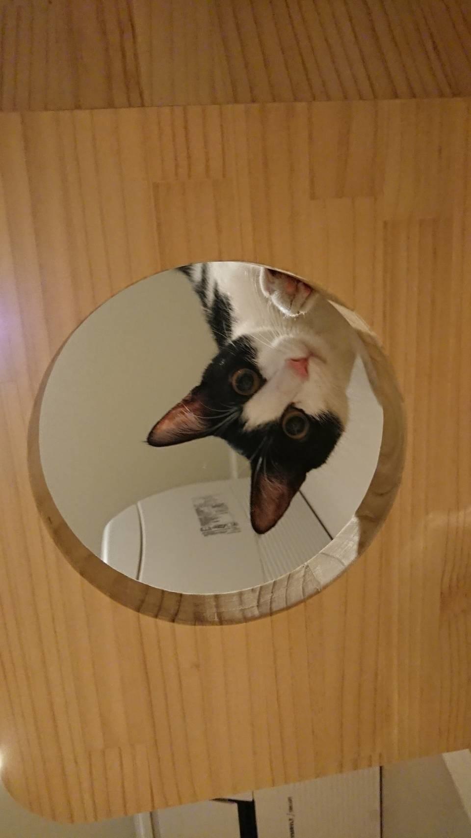 寵物住宅可愛的貓咪04